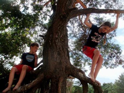 crianća na árvore